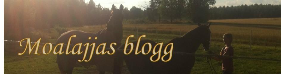 Moas blogg
